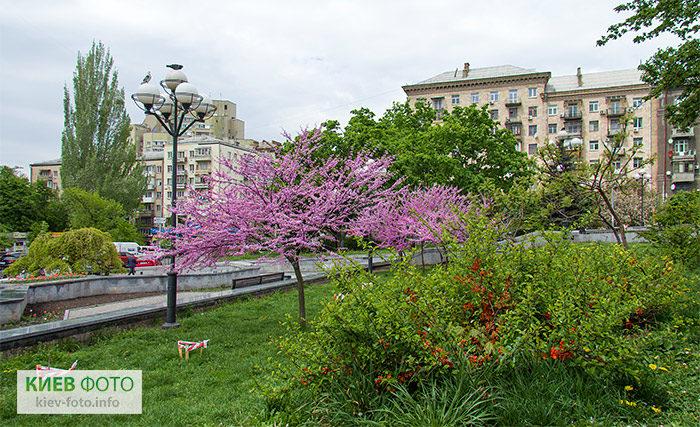 Парк Марії Заньковецької