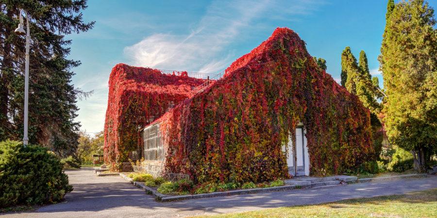 Червона оранжерея у Національному експоцентрі